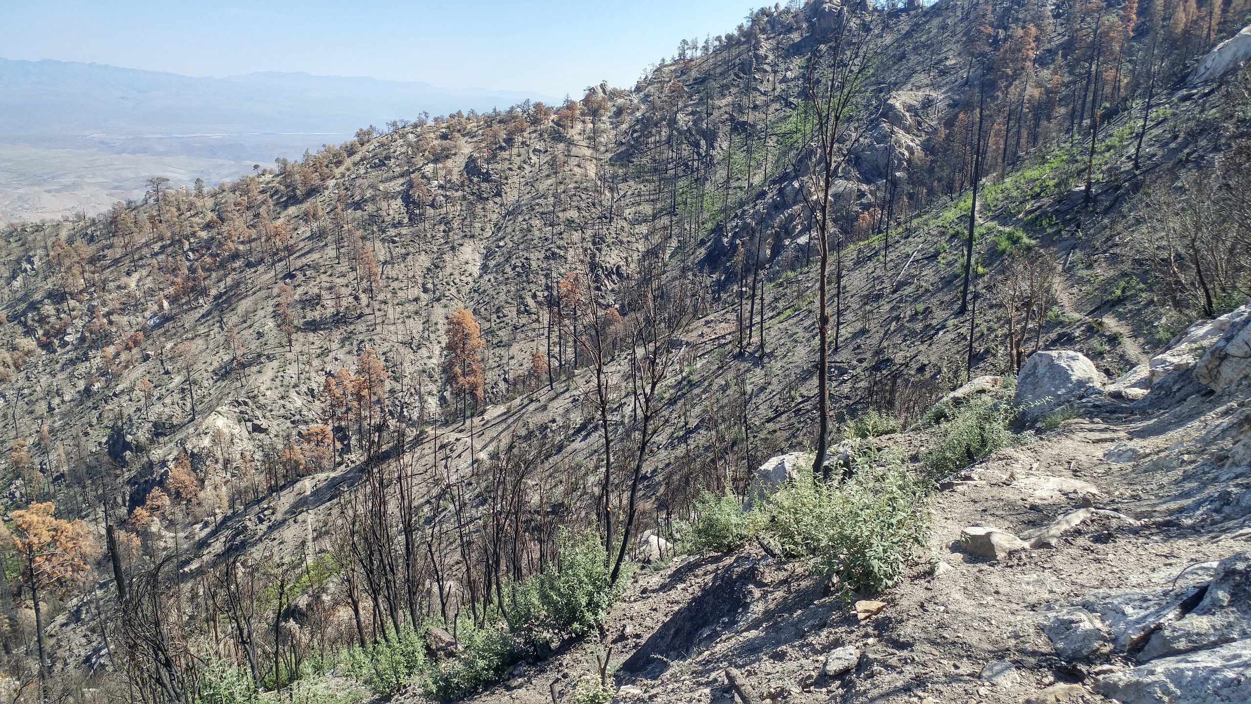Arizona Trail Through Santa Catalina Mountains Reopens After 10-Month Fire Closure