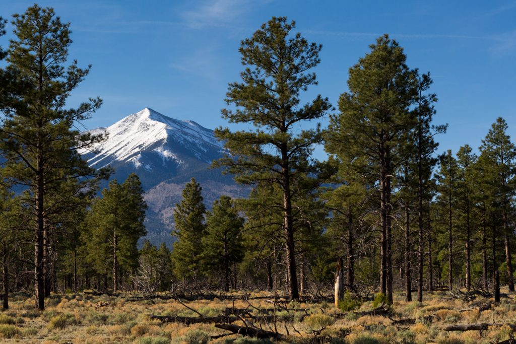 Coconino and Kaibab National Forests Reopen on July 6